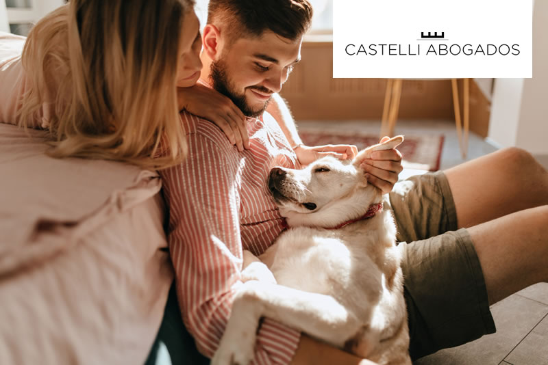 Mascotas y divorcio ¿quién se queda con el perro si nos divorciamos?